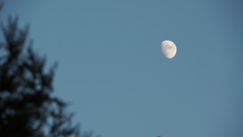 maan maanfases ondernemer uitleg wilde ondernemer kayleigh smith avoja wassende maan gibbous keuzes