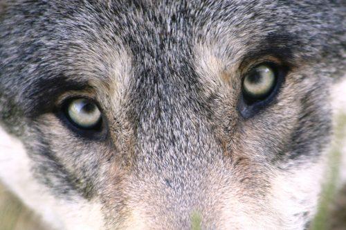 way wolf wilde ondernemer wild woman entrepeneur kayleigh smith avoja