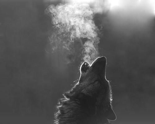 wolf howl free power entrepeneur