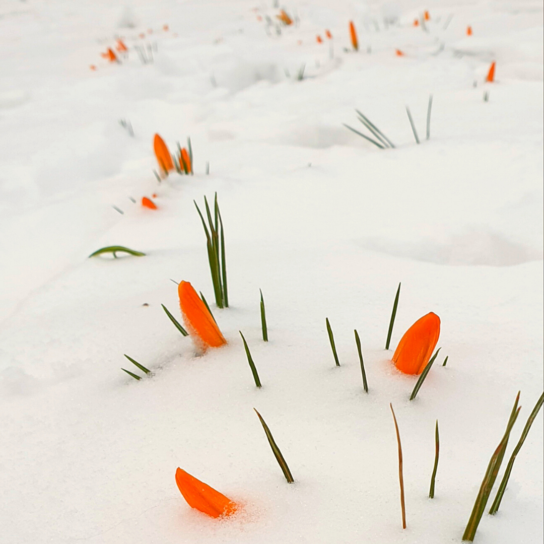 starting anew in uncertain times imbolc corona business woman witch wild entrepreneur kayleigh smith flowers snow